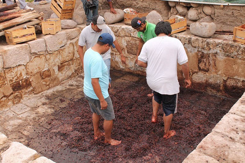 Codpa Valley, grape harvest festival 1