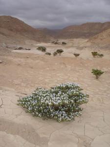 Desierto, camino Codpa-Timar3