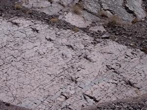 Dinosaur traces 1