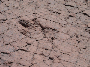 Dinosaur traces 2